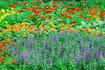 Colorful flowers in nature at the gardens.