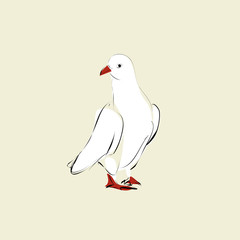 white dove with red beak and red feet