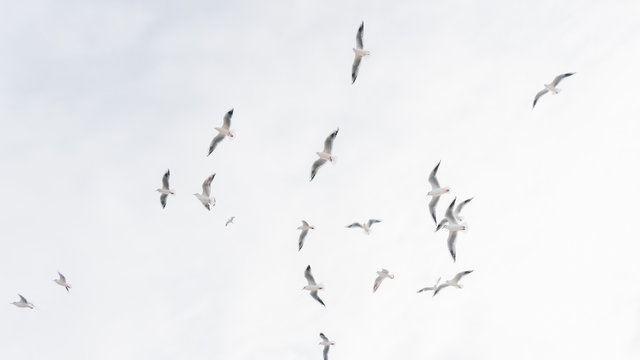 A group of flying seagull birds. Seagulls in the sea.