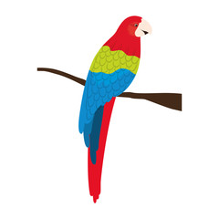 colorful parrot bird animal over white background. vector illustration