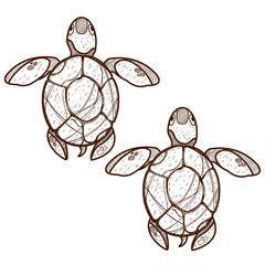 Sea turtles. Clipart on the marine theme. Animal protection.