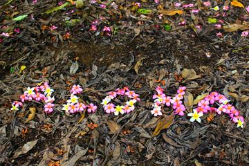 Aloha Hawaii Hand lettering with plumeria flowers photo