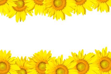 sunflower frame isolated on white
