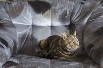 Black and brown striped cat resting on sofa