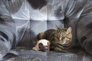 Cat and dog toy together on sofa