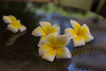 Blossoming plumeria flowers in Rethymno, Crete, Greece.