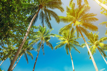 tropical landscape palms bottom view