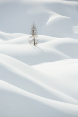 Foto op Plexiglas Heuvel Snow, winter mountain landscape, tree alone