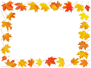 Set of Autumn maple leaves with place for your text isolated on white background