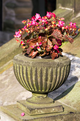 Old stone vase with pink flowers