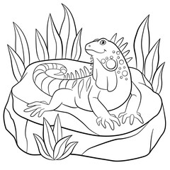 Coloring pages. Cute iguana sits on the rock.