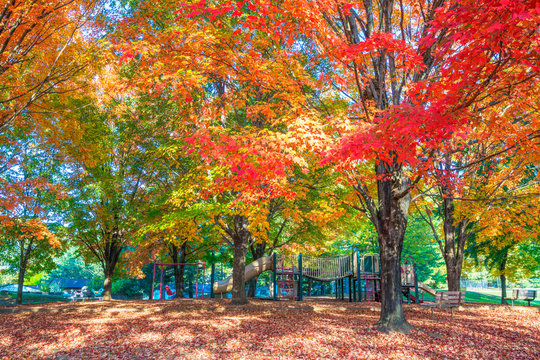 Children's playground with colorful autumn foliage.