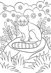 Coloring pages. Little cute red panda smiles.