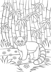 Coloring pages. Little cute red panda in the forest.
