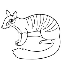 Coloring pages. Little cute numbat smiles.
