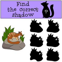Educational game: Find the correct shadow. Little cute numbat.