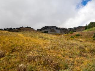 Mt. Rainier National Park Landscape