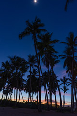 palm dawn morning