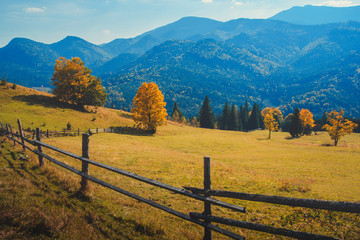 Wall Murals Lavender Autumn in the Carpathian mountains with yellow trees
