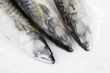 Frosen atlantic mackerel on white