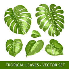 Tropical leaves set. Palm tree isolated on white background. Set of tropical elements. Collection of palm leaves on a white background. Vector illustration bundle.