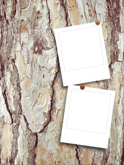 Two blank square photo frames on brown tree bark