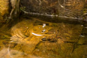 Water drop in nature
