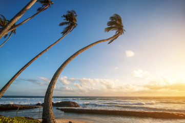 ocean beach on sunset with row palms on horizon