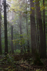 Fototapete - Summertime misty morning in forest