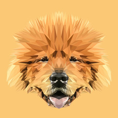 Dog Chow Chow low poly design. Triangle vector illustration.