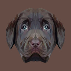 Labrador Retriever Dog puppy animal low poly design. Triangle vector illustration.