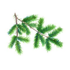 Christmas tree branch. Isolated on a white background. Watercolor illustration.