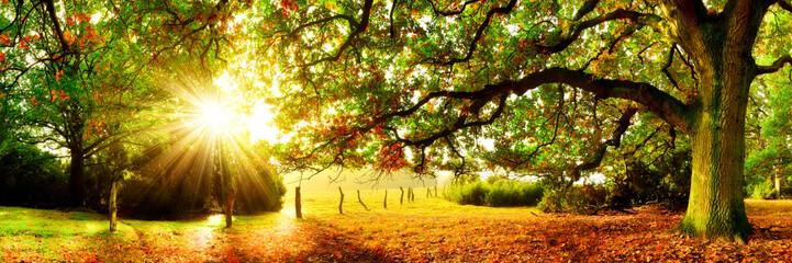 Fototapete - Landschaft im Herbst, Panorama mit Wald, Wiese und Sonne