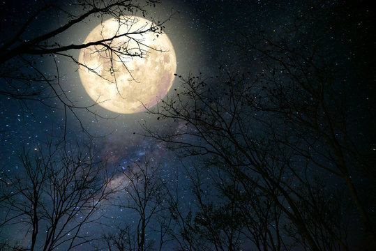 Beautiful milky way star in night skies, full moon and old tree - Retro fantasy style artwork with vintage color tone.