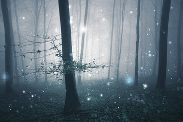 Wall Mural - Dark blue foggy forest fairytale with fireflies bokeh background. Color filter effect used.