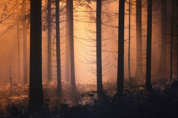 Wall Mural - Scary foggy orange light in the forest