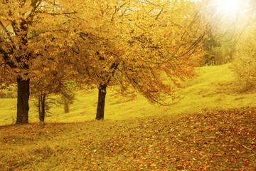 Scenic vibrant autumn countryside landscape in the warm fall sun