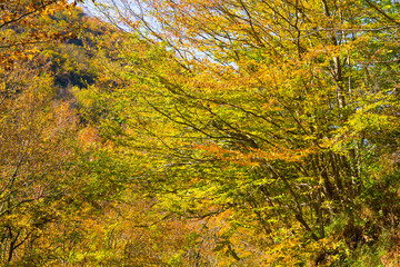 Tree branches with yellow and green autumn leaves