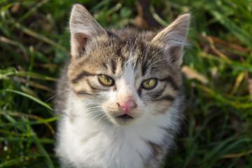 kitten portrait outdoors
