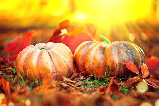Autumn Thanksgiving pumpkins. Orange pumpkin over autumnal nature background