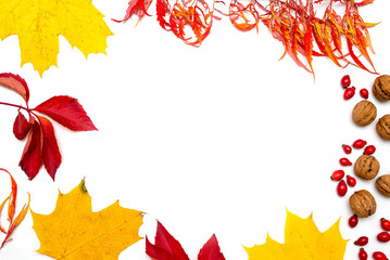 Autumn background from maple leaves, rose hips and walnuts as a frame isolated on white background