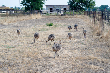 Excursion to the ostrich farm