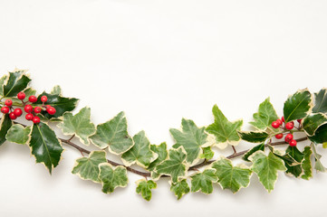Festive sprig of holly and ivy leaves with berries isolated on a
