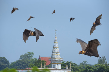 Bats flying on blue sky , Church background