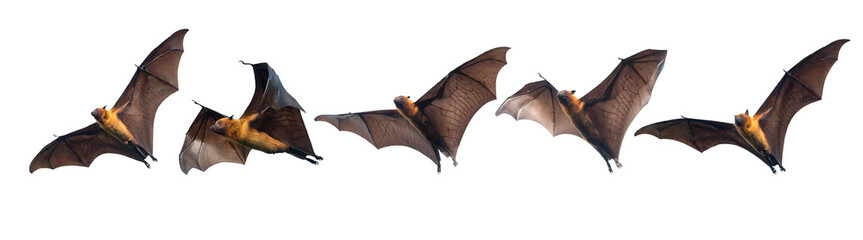 Bats flying on white background