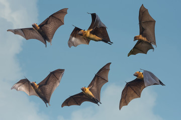 Bats flying on blue sky