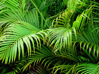 palm tree plant leaf green nature background garden