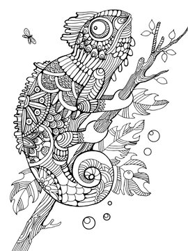 Chameleon coloring book for adults vector