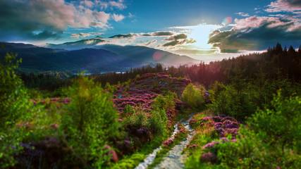 Fototapeta Wschód słońca w górach, Szkocja obraz