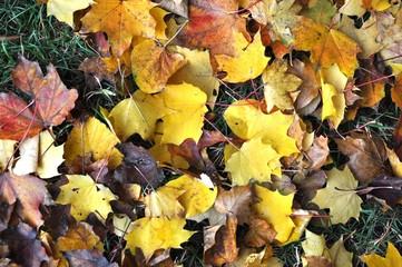 Colourful autumn leaves carpet